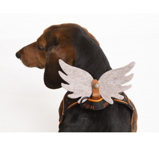 Angel wings for pet