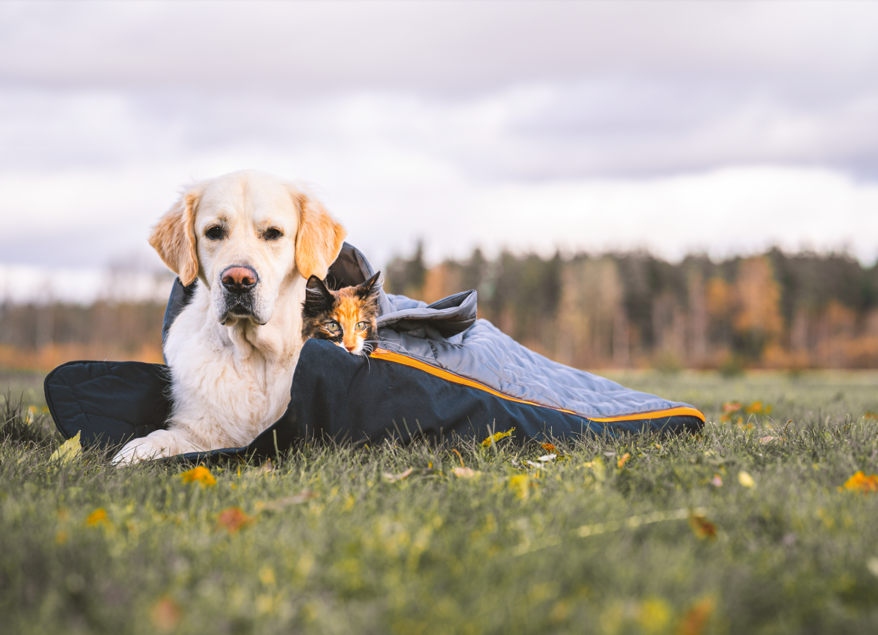 Hiking and travelling with pets